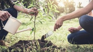 Climate positive benefits – Is your business doing its bit?